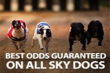 Best Odds Guaranteed on all Sky Dogs Races