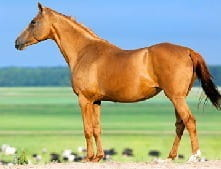 A filly is a female horse under the age of four years old