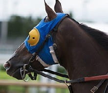 The head gear worn by a horse to restrict its peripheral vision