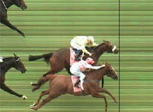 A dead heat is when two or more horses cross the finish line at exactly the same time
