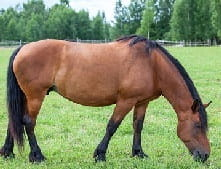 A mare is a female horse over the age of three