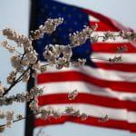 US flag behind some branches