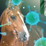 Two stables in Ireland quarantined over Equine flu fears