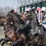 horses at stall
